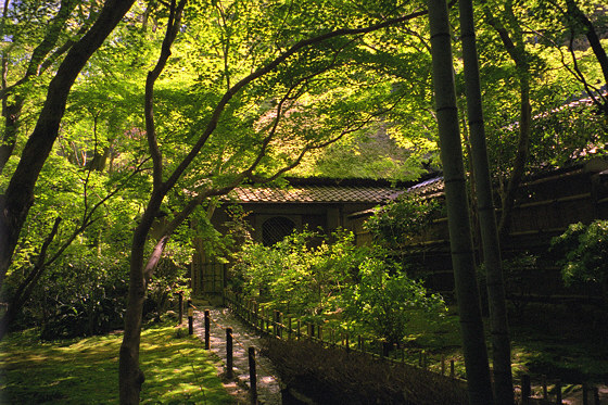 Gio-ji Temple path