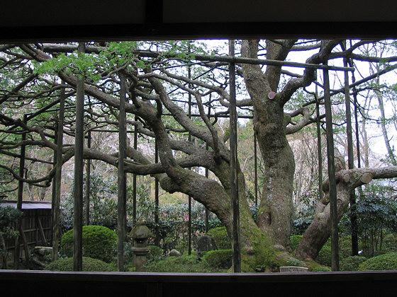 Hosen-in temple garden