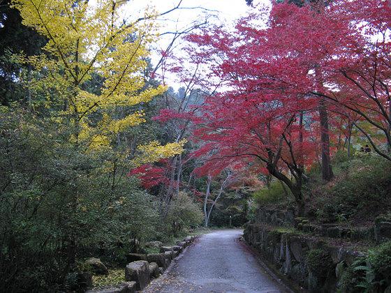 Ishiyamadera Temple <br /><br /><br /><br /><br /><br /><br /><br /><br />Path