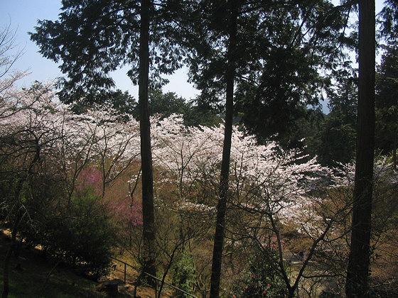 Ishiyamadera Temple <br /><br /><br /><br /><br /><br /><br /><br /><br />cherry blossom