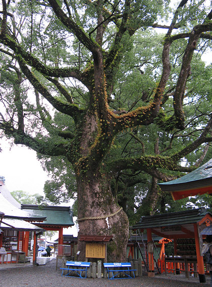 Kumano-Nachi Taisha Grand Shrine Kami