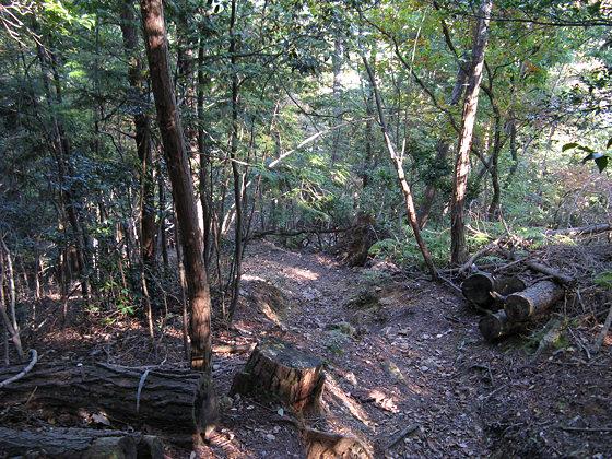 Ohara Mount Suitai Path