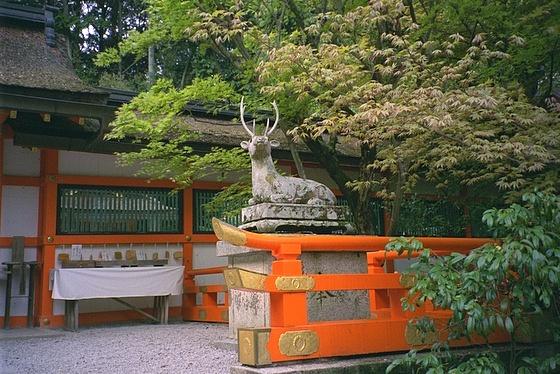 Oharano Deer