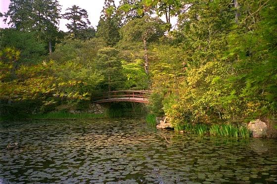 Oharano Lily Pond
