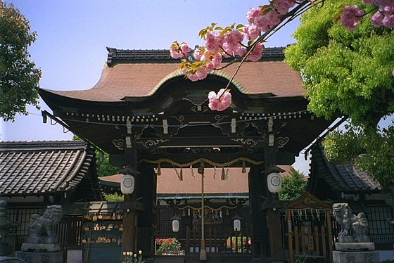 Rokuson-oh Shrine Sakura