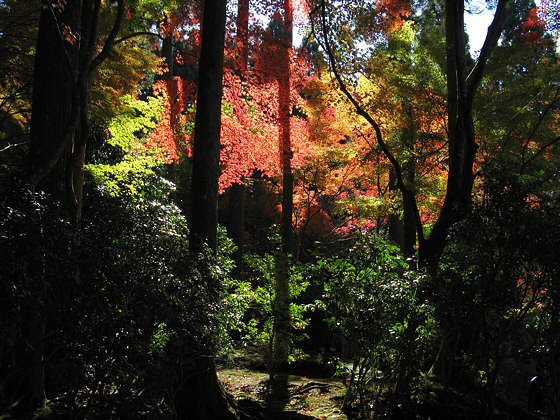 Sanzen-in Temple Foliage