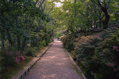 Toshodaiji Temple Path
