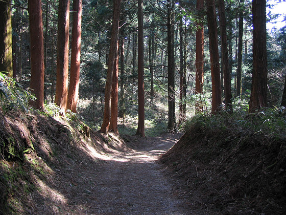 Yokawa Jokoin Temple Path
